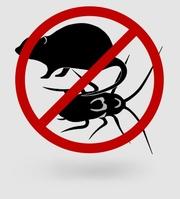 Уничтожение насекомых и грызунов, (клопы, тараканы, блохи, крысы и тд.)